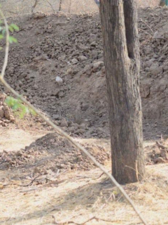¿Puede ver el leopardo en esta foto? Nuevo reto viral puso a muchos a usar lupa