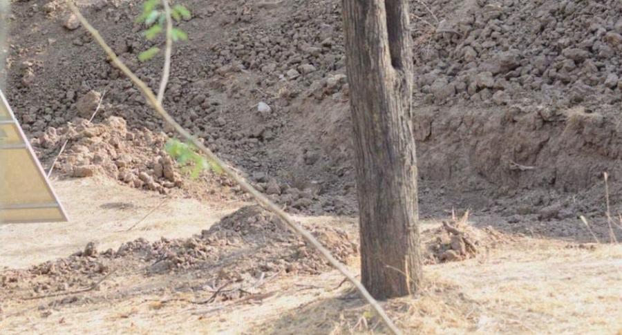 Leopardo escondido.