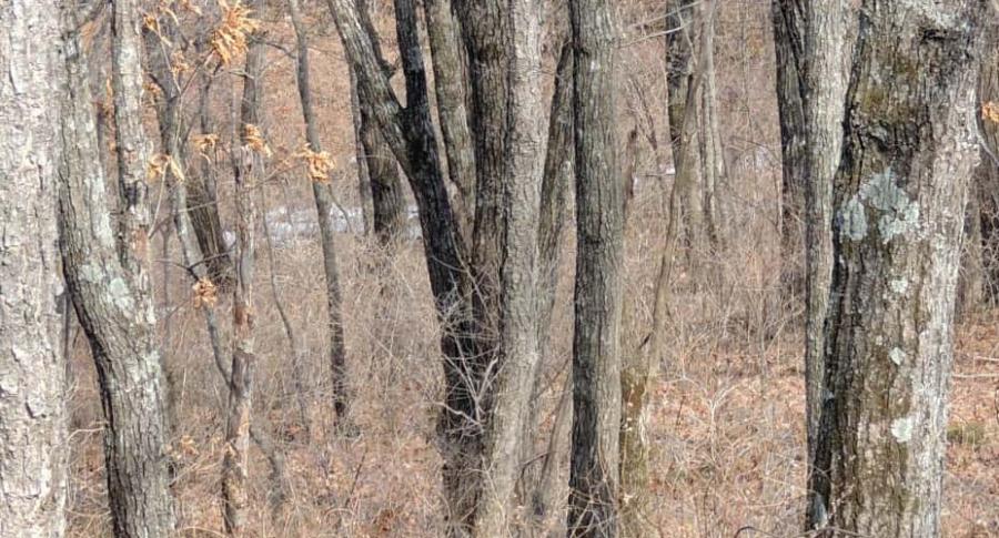 Leopardo camuflado.