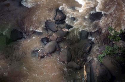 Elefantes ahogados en Tailandia