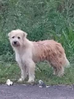 Fiel perro esperó a sus dueños durante 4 años en el mismo lugar, luego de perderse