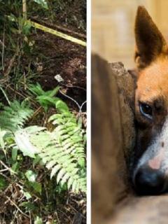 Niño y su perro caen en campo minado: la mascota murió y el pequeño está herido