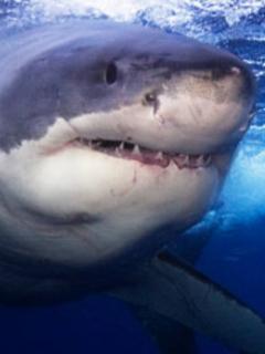 Tiburón responde a su instinto salvaje y devora a otro en acuario de zoológico