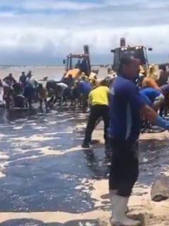 Playas de Brasil completan un mes en medio de petróleo, que causa desastre ecológico