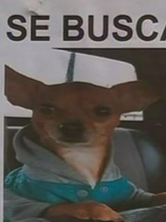 En tan solo unos minutos, ladrones se roban perro que estaba dentro de un vehículo