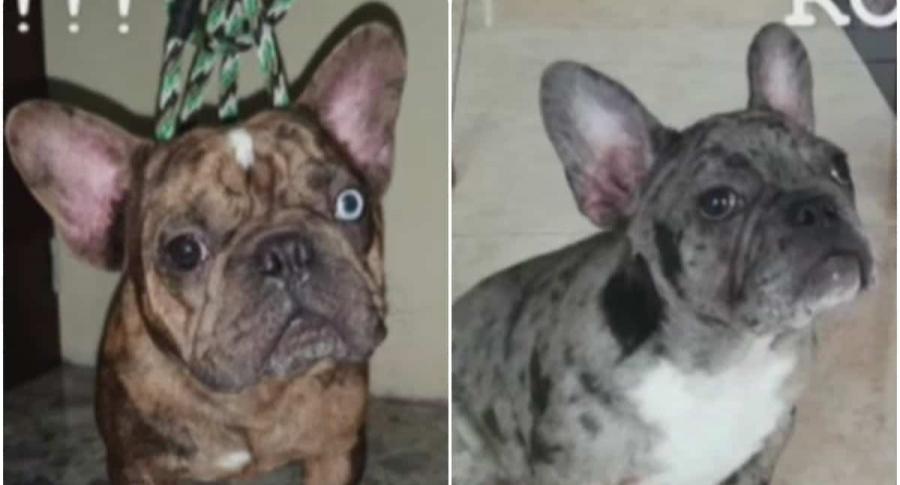 Perros robados