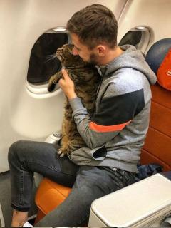 Engañó a aerolínea para que su gato obeso viajara a su lado, y así lo castigaron