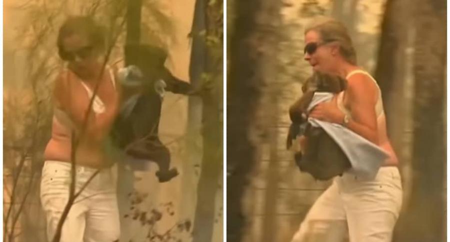Mujer salva a koala de incendio.