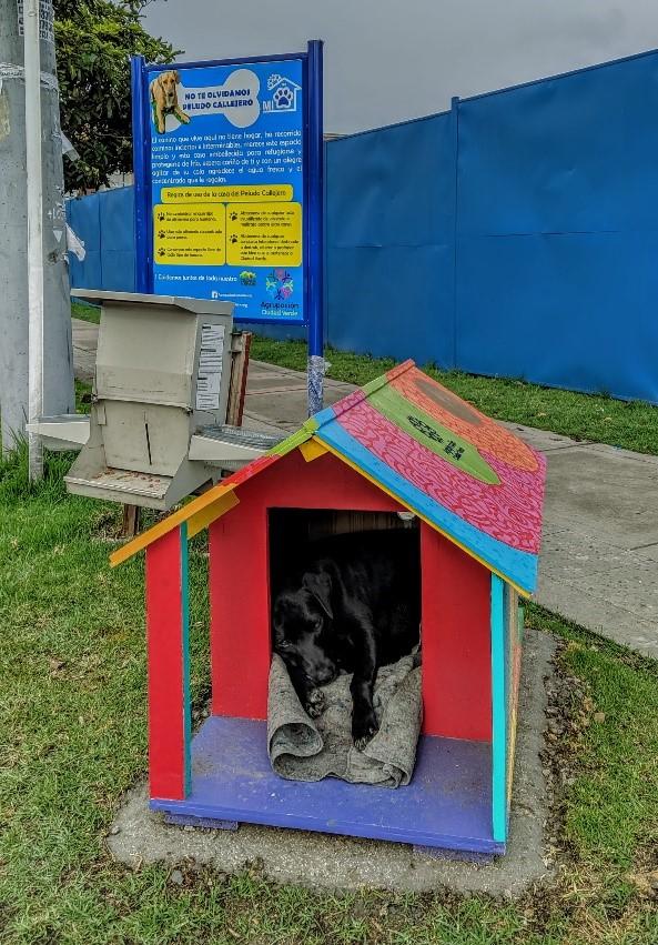 Casas para un perros en condición de calle