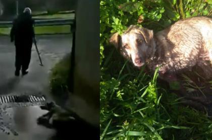 Cazador dispara y arrastra a perra