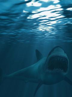 [Video] Captan a tiburón blanco devorando a un pez gigante de su mismo tamaño
