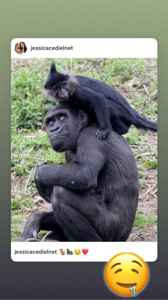 Gorila y mono.