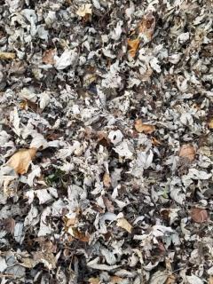 ¡Aliste lupa!: ¿puede ver la gata que se esconde entre todas estas hojas?