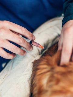 Veterinario le aplicó eutanasia a un perro por error, luego de confundir a su dueño