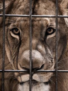[Video] León atacó a cuidador de zoológico ante la mirada aterrorizada de visitantes