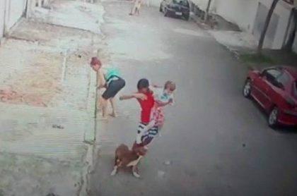 pitbull ataca a niño de 5 años