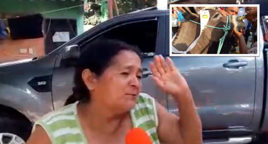 Mujer que le dio cerveza por a nariz a un burro en Cundinamarca