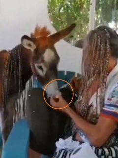 Denuncian maltrato animal