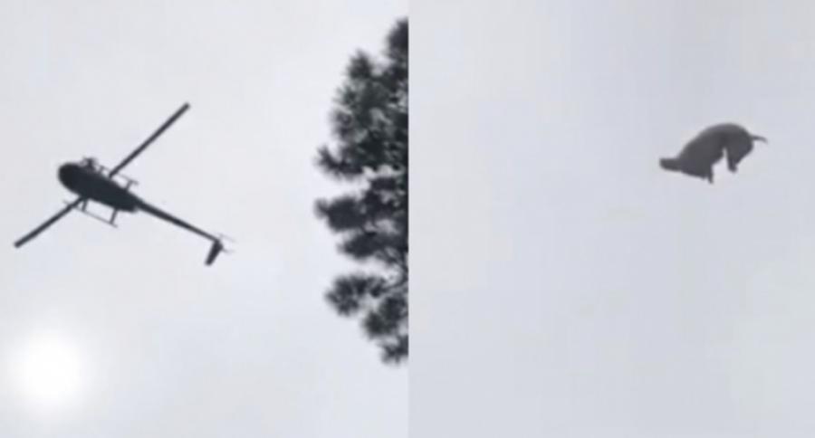 Lanzan cerdo desde helicóptero