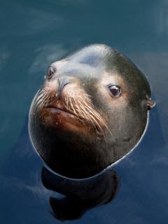 Viralizan foto de foca con aspecto de un humano enojado y la red estalla con memes