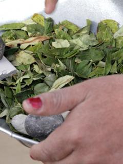 Colombia recibirá US$ 5.000 millones para combatir drogas y sustituir narcocultivos