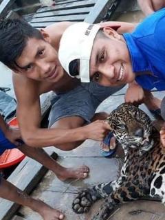Mataron a jaguar en peligro de extinción y alardearon de su 'botín' en redes sociales