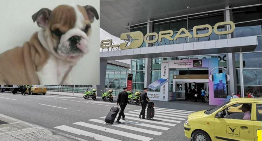 Perro robado en aeropuerto El Dorado de Bogotá