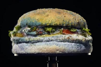 Hamburguesa con moho
