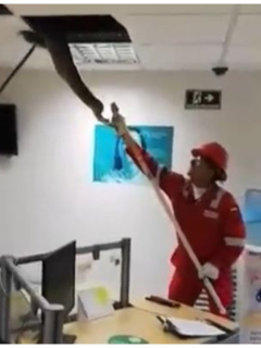 [Video] Boa constrictor apareció en oficina de Ecopetrol; se habría comido un gato