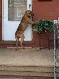 Perro esperó durante 3 semanas a sus dueños, sin saber que ellos lo habían abandonado