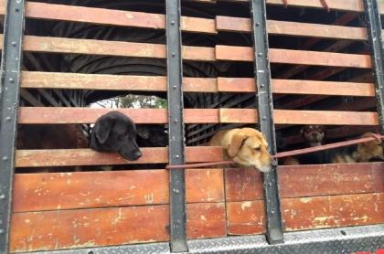 Perros transportados en camiones en Usme, Bogotá