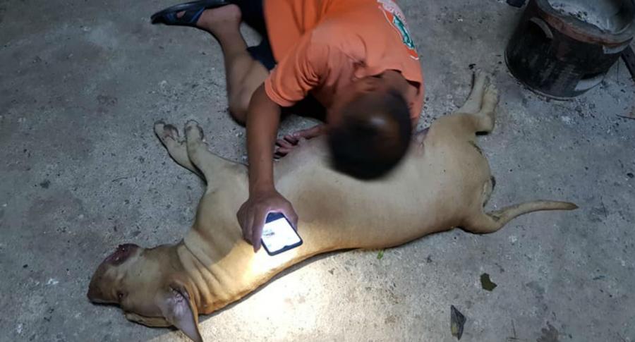 Perrita embarazada muere en lucha con cobra
