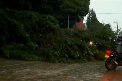 Otro árbol cae sobre la vía la Calera