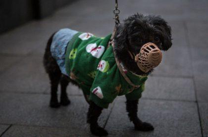 Perro con tapa hocico