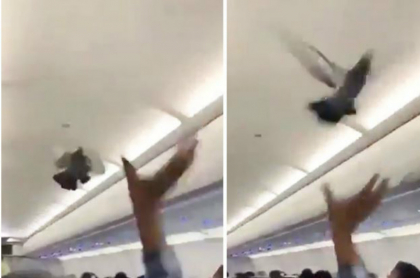 palomas en avión