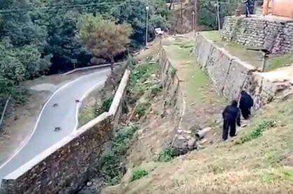 Policías se disfrazan de osos para ahuyentar micos