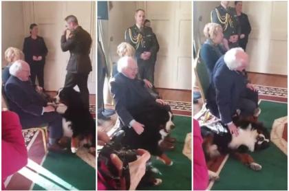 Perro interrumpe evento del presidente irlandés.