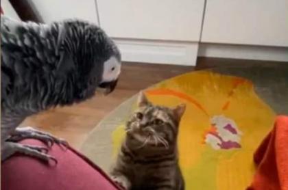Loro le ladra a gato, video viral