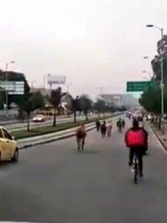 Imagen de los caballos sueltos en Bogotá