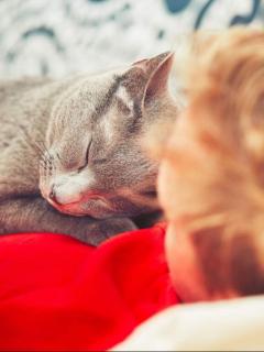 Gato duerme con el dueño.