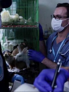 Rescate de animales en Bogotá.