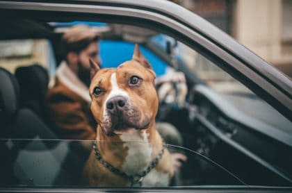 Perro dentro de carro