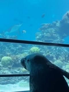 lobo marino en acuario vacío