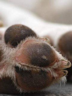 Matan perro en Villa de Leyva y dueño culpa a exmagistrado