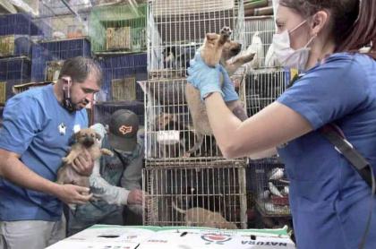 Venta de animales en plazas de mercado de Bogotá