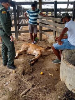 Miguel Ángel Borja en su finca denunciando el hecho de maltrato animal