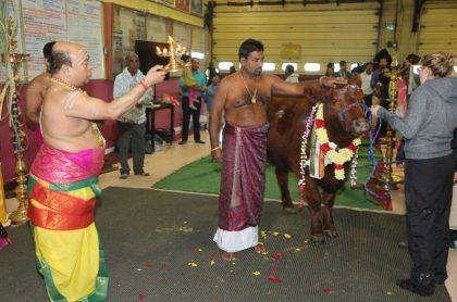 Toro en India