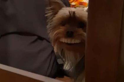 Perro con sonrisa humana.