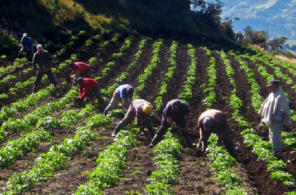 Campesinos Colombia