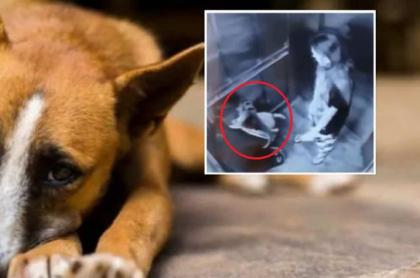 Graban a pareja que maltrata a un perro en Armenia